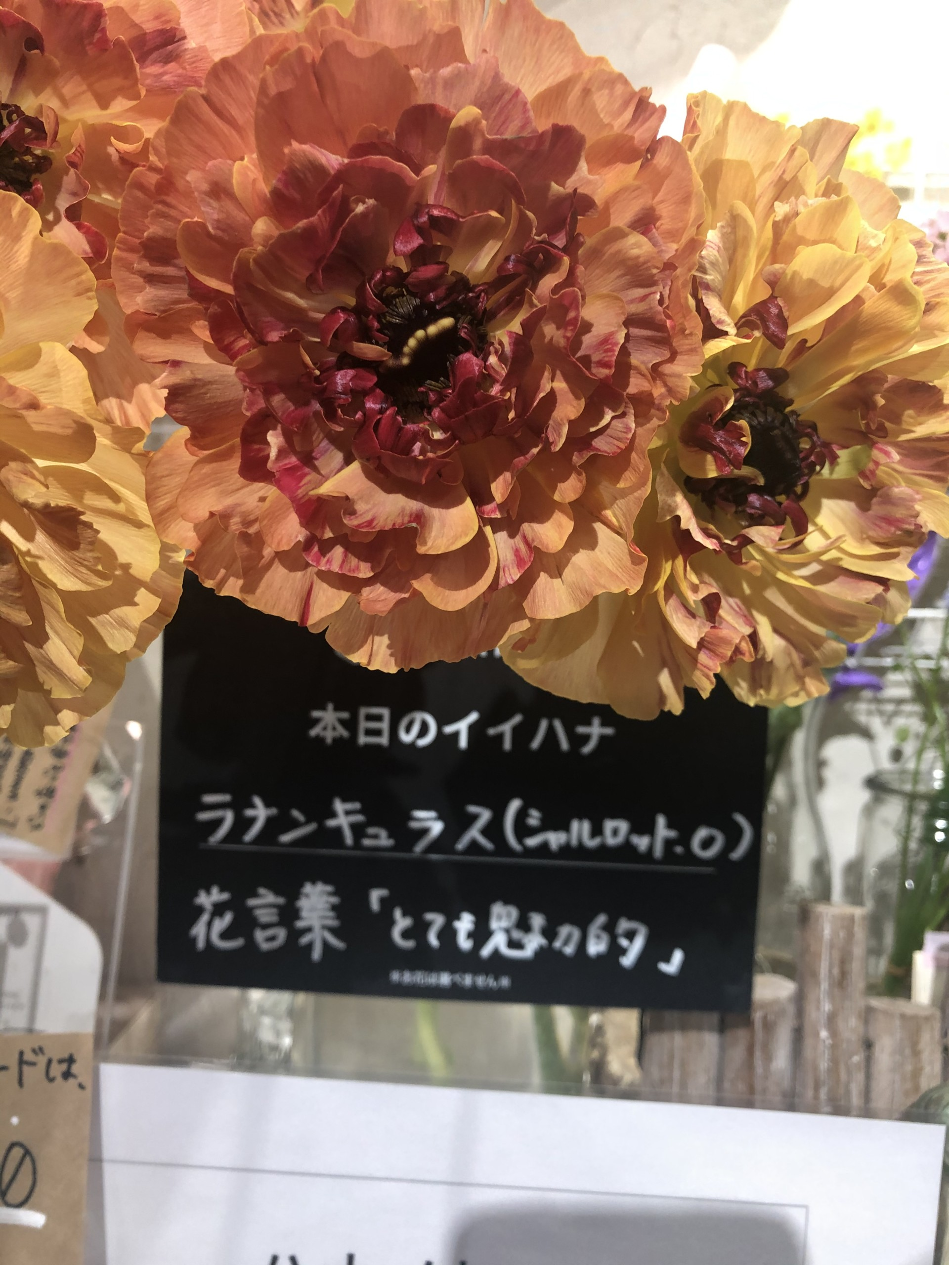 ⭐️美幸サロン【ソフィア・ミューズ目黒】⭐️